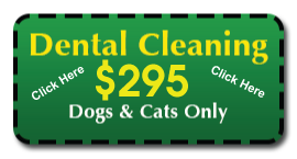 Dog and Cat Dental Special Howell Animal Hospital, Howell NJ